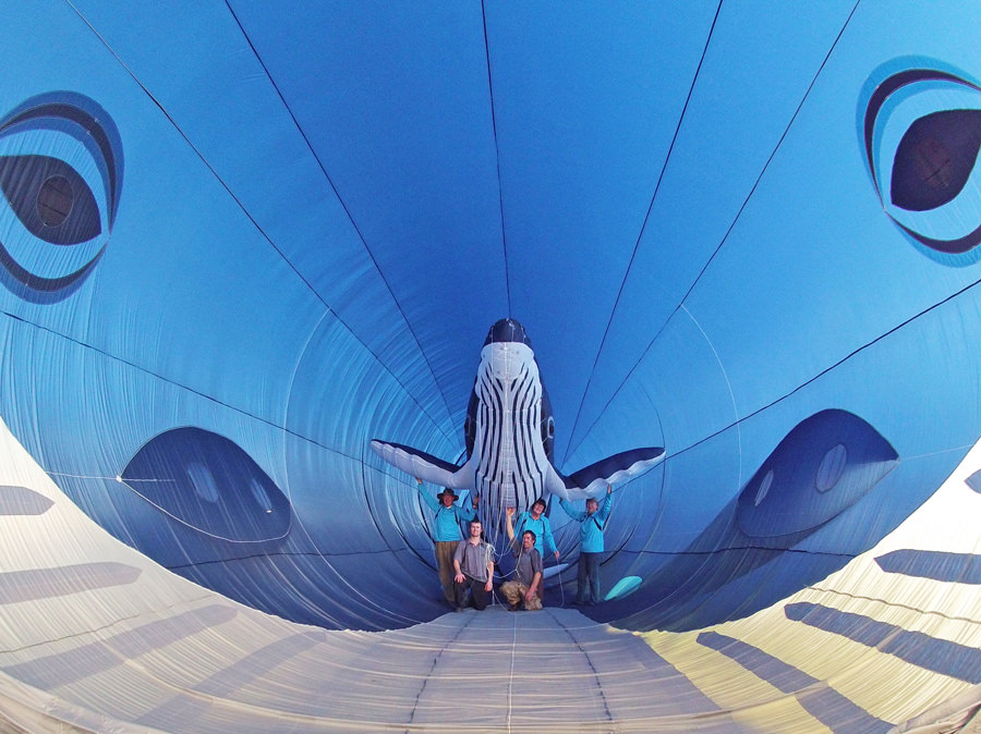animali-volanti-1