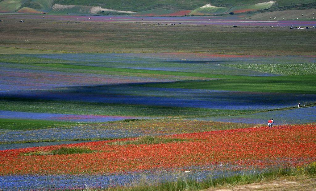 I meravigliosi colori della fioritura di Castelluccio