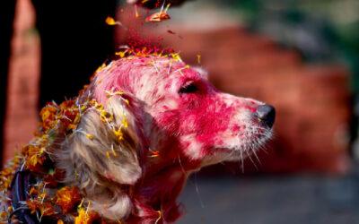 Kukur Tihar, in Nepall'uomo ringrazia i cani per la loro amicizia