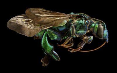 Gli insetti ultra dettagliati di Levon Biss