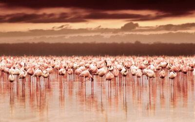 Lo spettacolo dei fenicotteri rosa in Camargue