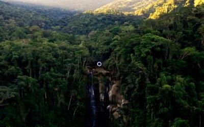 Un anello luminoso nella natura Brasiliana, Mariko Mori