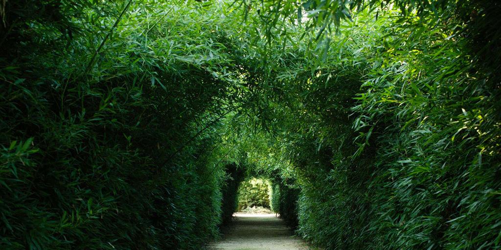 labirinto di bambu