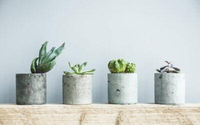 16 foto d'ispirazione di Cactus