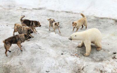 Foto sugli effetti del cambiamento climatico in atto