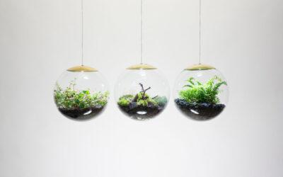 Piccoli ecosistemi in sferiche lampade