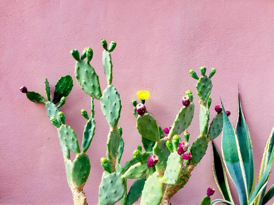 cactus-by-giulia-casartelli