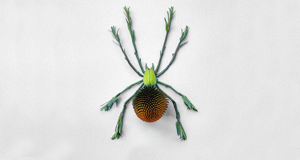 insetti-dai-fiori-raku-inoue