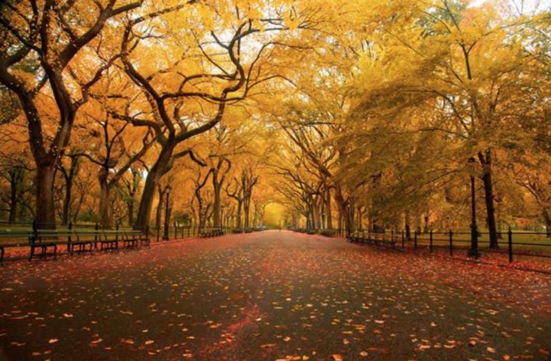 Gli Olmi a Central Park, New York
