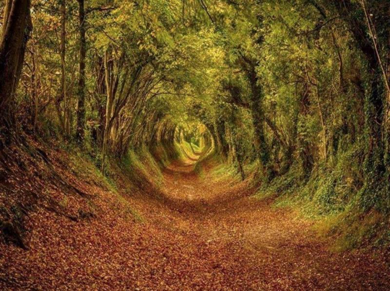 La foresta di Ashdown in West Sussex, Inghilterra