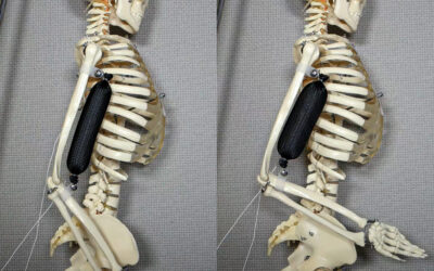 I muscoli artificiali stampati in 3D