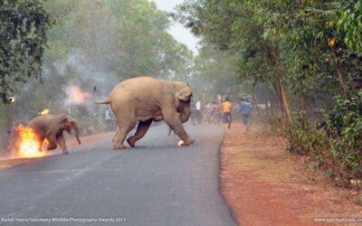 """Hell is here"", la foto di Biplab Hazra al Sanctuary Wildlife Photography Awards 2017"