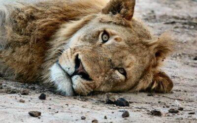 19 Fotografie che catturano intensi sguardi di animali