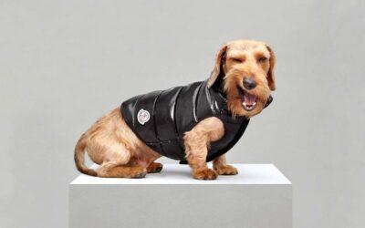 Mondog, i piumini per cani di Moncler
