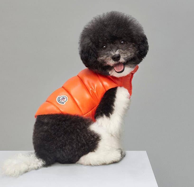 moncler dog