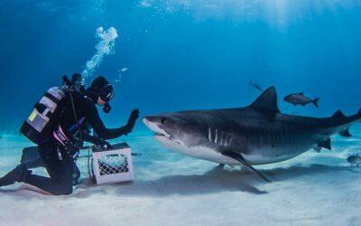 12 foto per cambiare l'opinione che abbiamo sugli squali