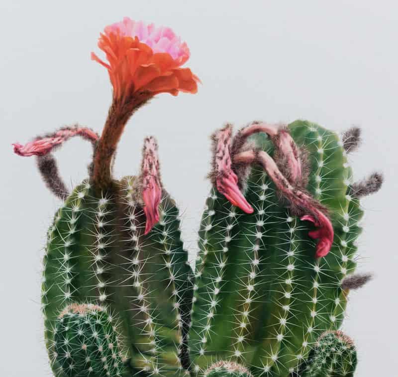 cactus-iperrealismo-12