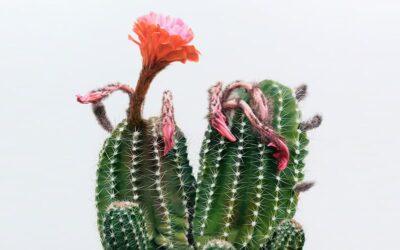 I cactus iperrealisti di Kwang-ho Lee