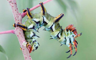 La bellezza cromatica degli insetti mostrata da Igor Siwanowicz