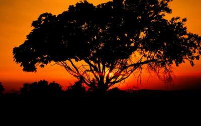 Farsi venire voglia di fare un viaggio in Sudafrica guardando un video