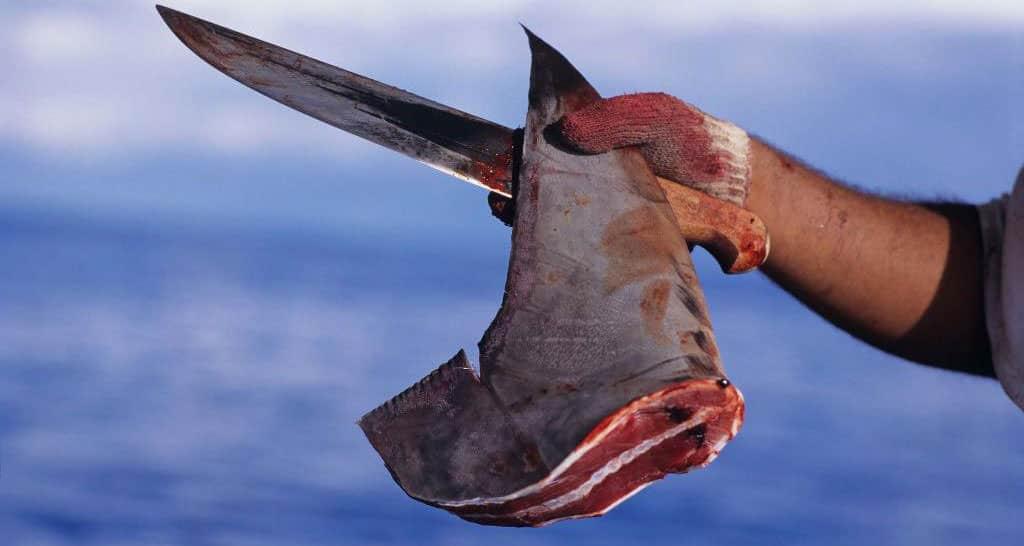 estinzione-squali-6