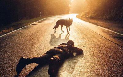 Le foto Honza Řeháček e del suo cane lupo Stika