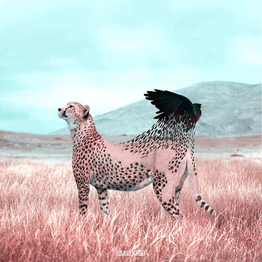 gli-animali-surreali-di-julien-tabet-9
