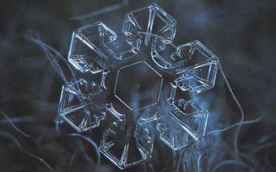 La perfezione geometrica della natura in macro fotografie