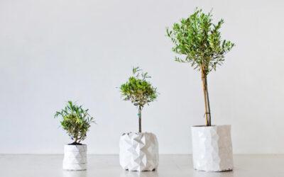 Growth, quando la pianta e il vaso crescono insieme