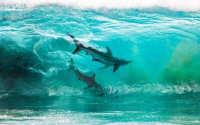 Incredibili fotografie di squali incorniciati dalle onde dell'Australia
