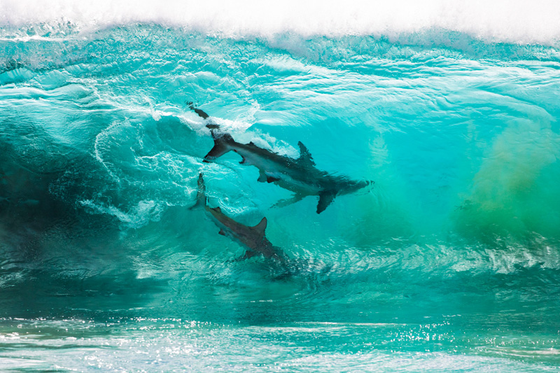 sean-scott-sharks-waves-1