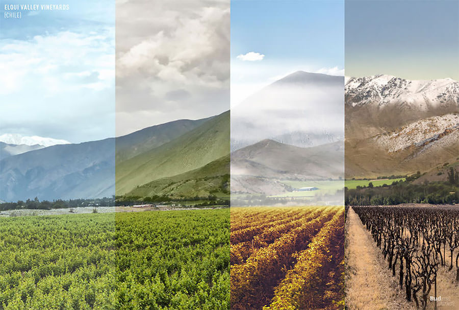 elqui-valley-vineyards-chile-