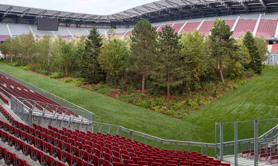 forest in a stadium