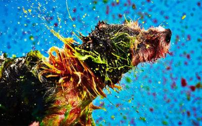 Canismo, i cani diventano artisti e pittori