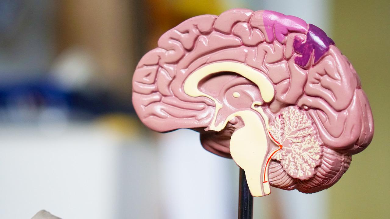 neuroarchitettura