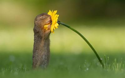 Lo scoiattolo che abbraccia un fiore