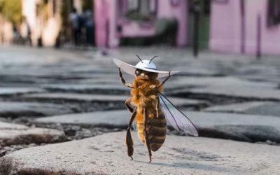L'ape influencer che raccoglie fondi per salvare la sua specie