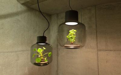 Le lampade di design che contengono eco-sistemi di Nui Studio
