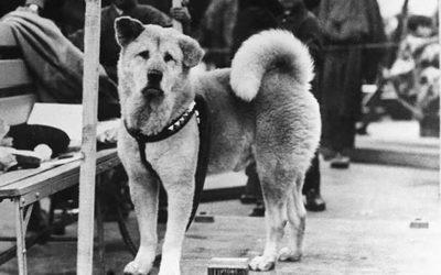 Alcune rare foto di Hachiko, il cane più fedele di sempre