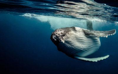 L'oceano di Darren Jew