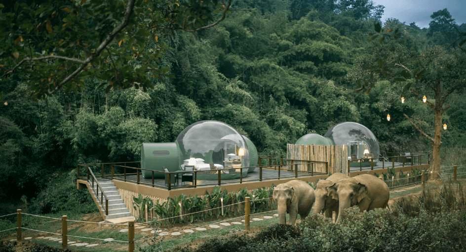Bubble Jungle