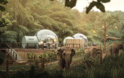 Bubble Jungle, le particolari stanze a forma di bolla per una notte tra gli elefanti