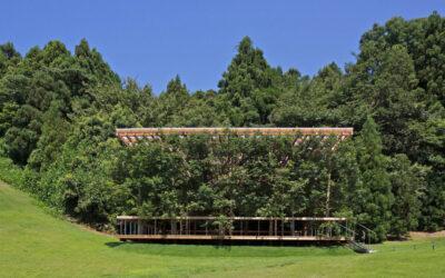 Il teatro giapponese fatto di alberi