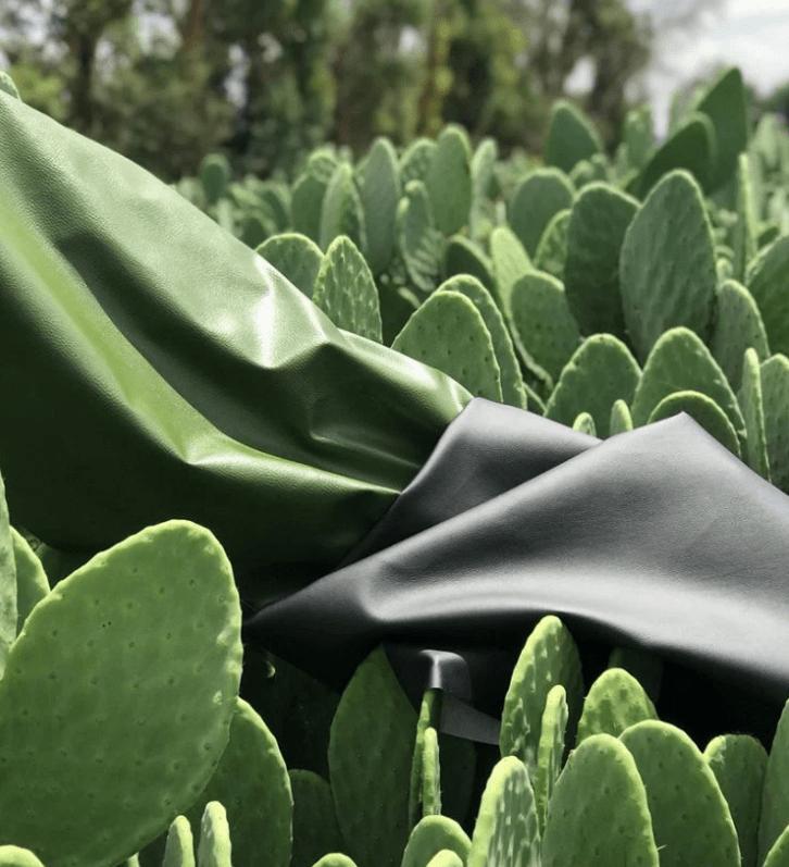 pelle di cactus
