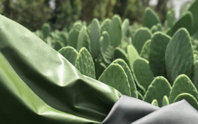 Desserto, la pelle sostenibile derivata dai cactus