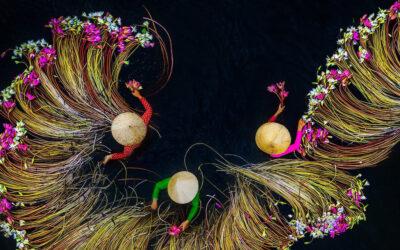 La spettacolarità della raccolta del giglio in Vietnam