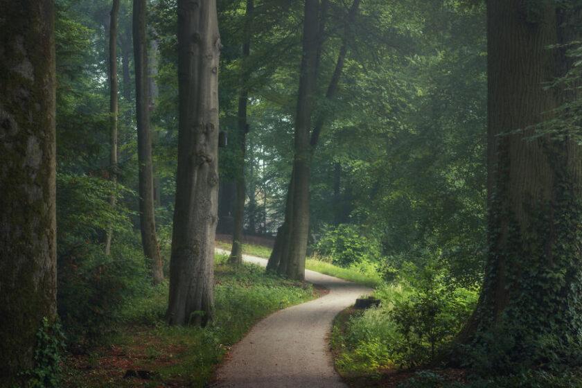 Foreste olandesi