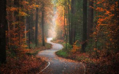 Le splendide foreste olandesi fotografate in ogni stagione, Albert Dros