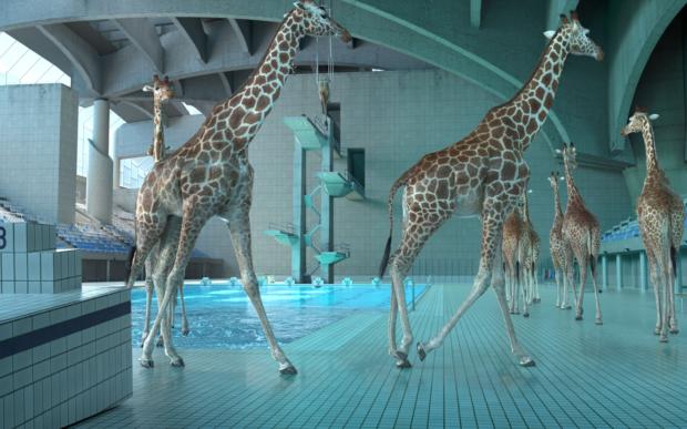 Giraffe in piscina nel corto di Nicolas Deveaux