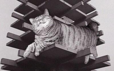 La tua dose quotidiana di gatti e Architettura Brutalista